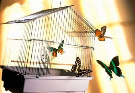 Imagenes Mariposas Saliendo De Un Frasco | mariposas saliendo de una jaula imagen 4298 im 225 genes cool