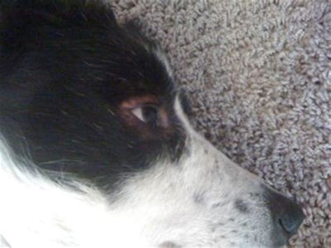 skin irritation on dogs food recipes breeds picture