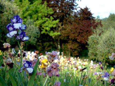 giardino delle firenze orari giardino dell iris di firenze 2018 20 giorni di apertura