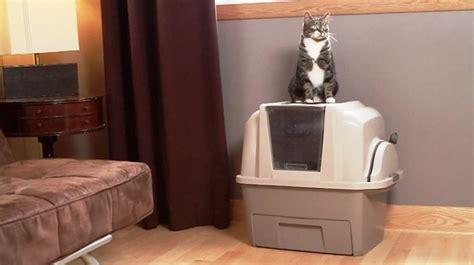 cassetta gatto autopulente toilette per gatti zooplus toilette per gatti toilette
