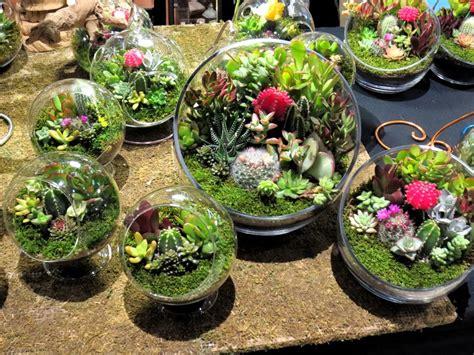 composizioni piante grasse in vaso piante grasse tante idee per creare delle splendide