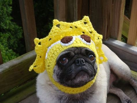 pugs with hats sweethoots pug hats animals