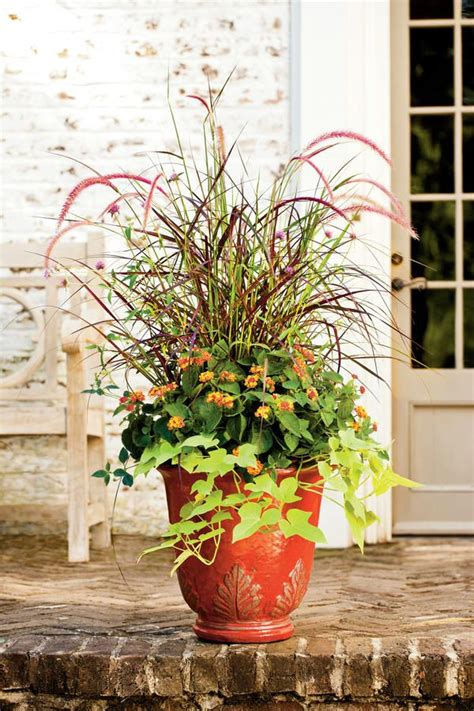 fall container garden ideas 388 best container gardens images on gardening