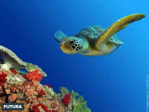 Coloring Book Info Tortue Marine