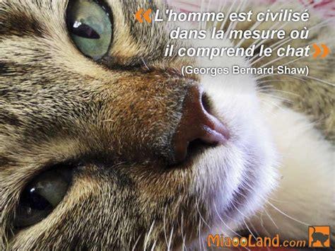 regarder oscar et le monde des chats regarder streaming vf en france citation chat