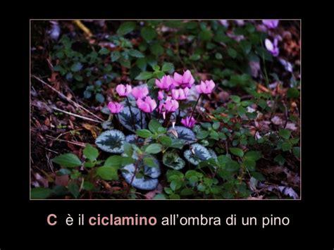 alfabeto dei fiori alfabeto dei fiori