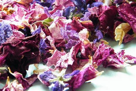 fiori da essiccare essiccare fiori fiori secchi come essicare i fiori