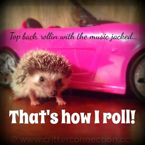 Hedgehog Meme - 103 best images about hedgehog memes funnies quotes and