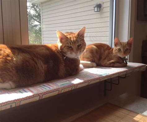 Window Shelf For Cats by Easy Window Shelf For Cats And Other Light Uses Like A Garden