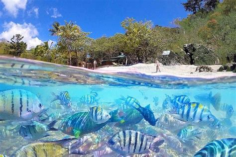 Beautiful Gardens In The World by The Most Beautiful Beaches In Queensland