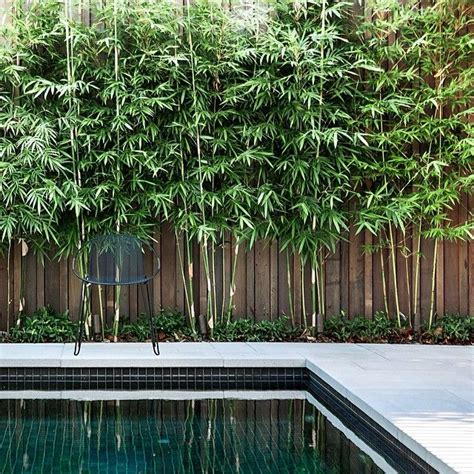 backyard bamboo garden best 25 bamboo garden ideas on pinterest bamboo