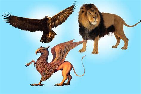 animal mitologico grifo elemento de poder la figura del grifo custodio contra
