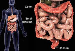 colon cancer the health junction