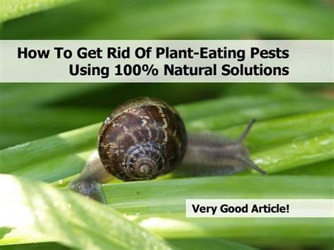 how to get rid of plant eating pests using 100 natural