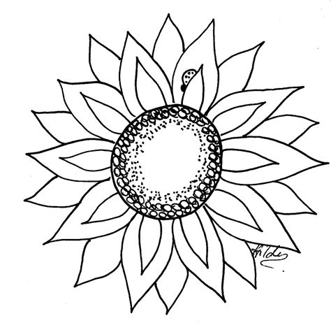 Outline Of Sunflower To Colour by Sunflower Line Cliparts Co