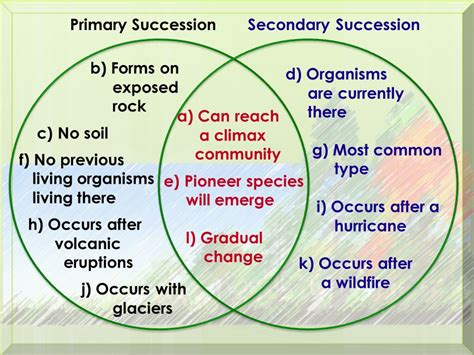 primary and secondary succession venn diagram ecological succession ppt