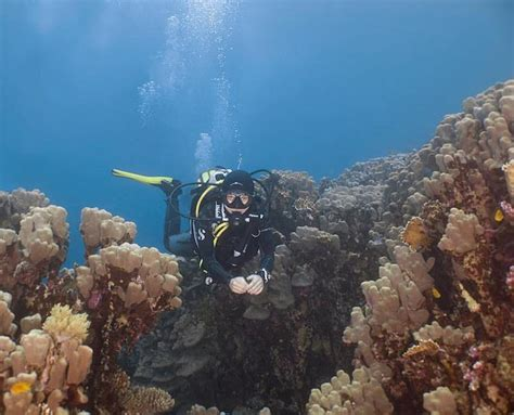 dive dahab best dive in dahab scuba diving website for