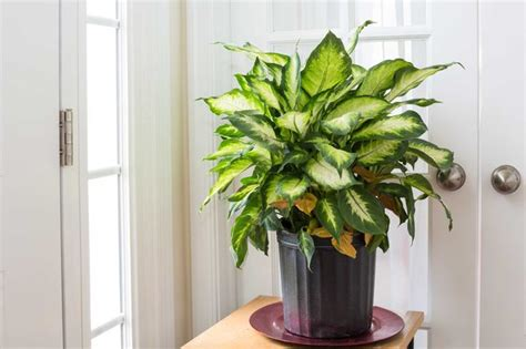 easy plants to grow inside the easiest indoor plants to grow in house artdreamshome