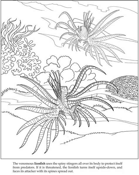 sea plants coloring pages coloring home