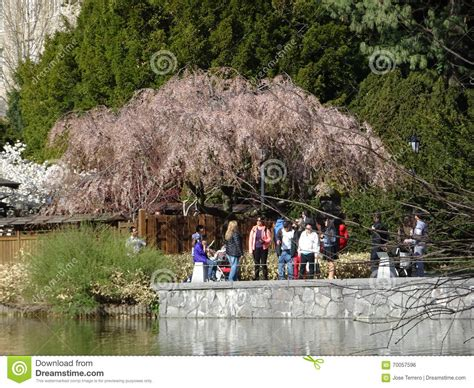 Garden City Ny Part Time Botanic Garden April 2016 Part 3 6 Editorial