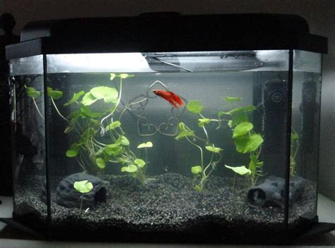 aquarium design betta 65 best betta fish tanks images on pinterest fish tanks