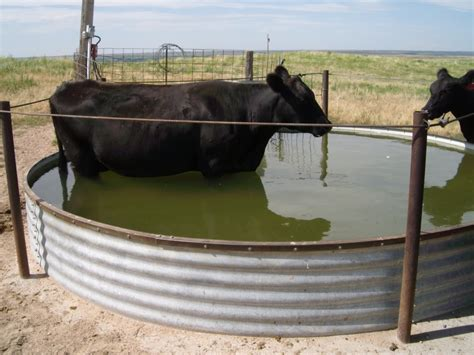 top 28 cattle water tanks images de coding the code chapter 2 feed and water cattle water