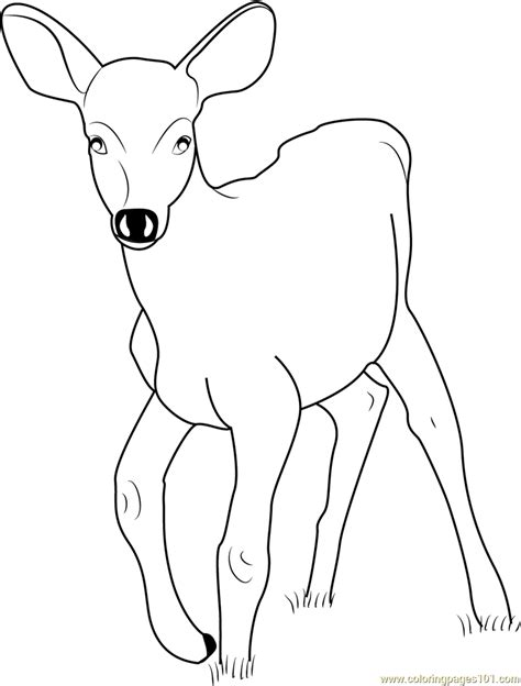 coloring pages baby deer baby deer coloring page free deer coloring pages