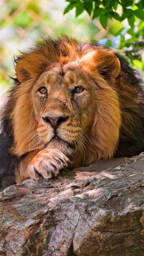fotos animales wallpapers los mejores fondos de pantalla de animales para iphone 5