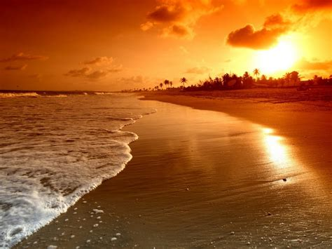 sunrise palms sea beautiful nature landscape water sky