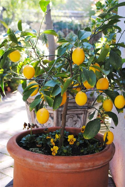 container gardening fruit trees 78 best images about small garden design ideas on
