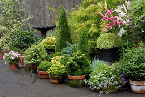 Conifer Garden Ideas 1000 Images About Conifers On Gardens Plants And Bottlebrush