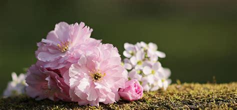 sierkers met witte bloemen gallery of kaart wildflower bloemen struik schoonheid
