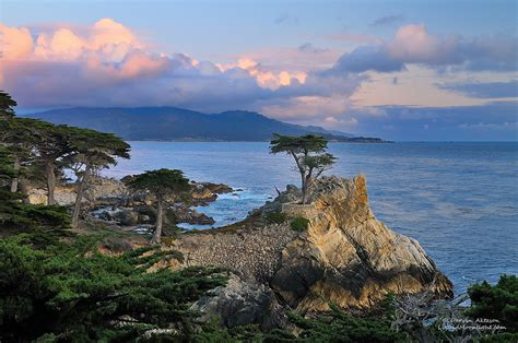 new years in monterey ca only the lonely monterey cypress explore standing