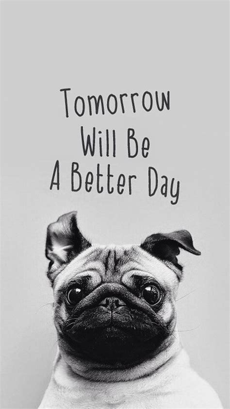 are or pugs better tomorrow will be a better day pug android wallpaper free
