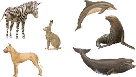 imagenes animales que respiran por los pulmones mamiferos