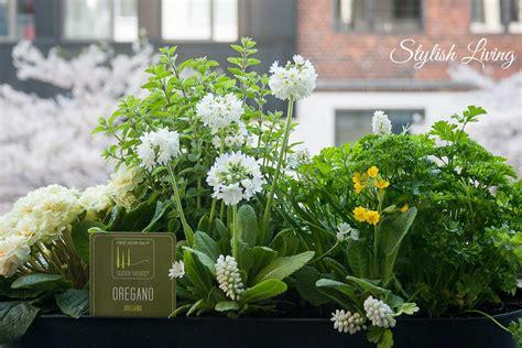 immergrüne pflanzen für sonnige standorte balkonblumen sonnige standorte gestaltungsbeispiele