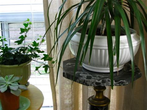 best indoor plants for living room house plants eclectic living room houston