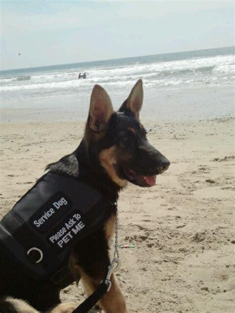 usa service dogs us army service us army