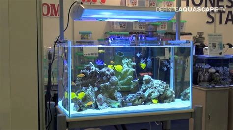 marine tank aquascaping aquascaping marine aquarium by honest star part 1 youtube