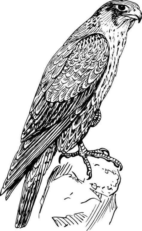 amazing birds coloring book books amazing birds coloring book amazing coloring pages birds