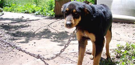 imagenes de animales maltratados maltrato animal mundo perros