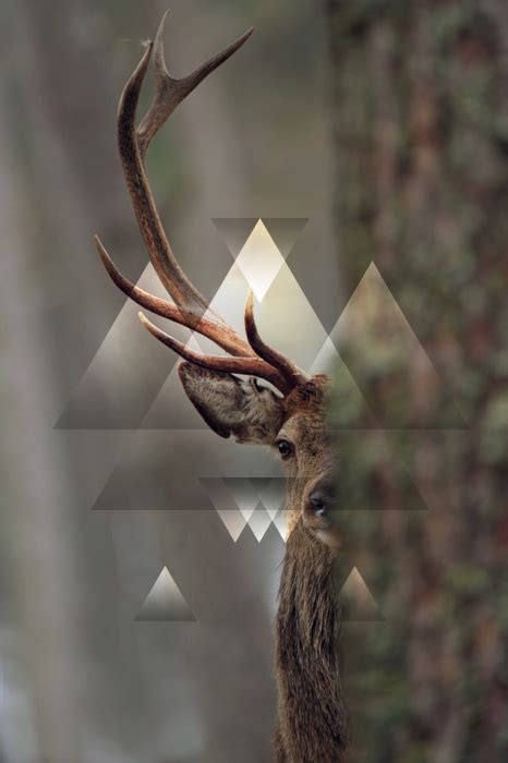 deer pattern iphone wallpaper swag hipster aztec animal triangle forest graphic graphic