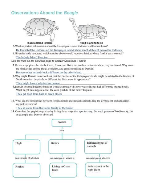 Patterns Of Evolution Worksheet Worksheets For School