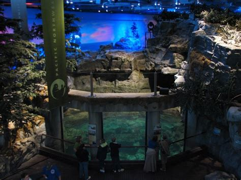 Shed Aquarium by Aquarium In Chicago Need To About Shedd Aquarium