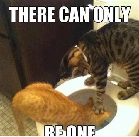 Cat Pic Meme - lolcat memes funny haha