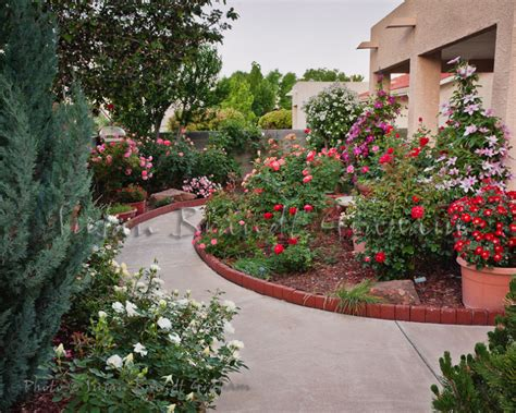 Southwest Backyard Designs Small Garden With Roses Rose Of Sharon And Clematis