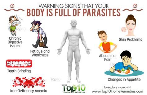 Does Detox Water Give You Diarrhea by Foods That Kill Parasites Naturally And Effectively