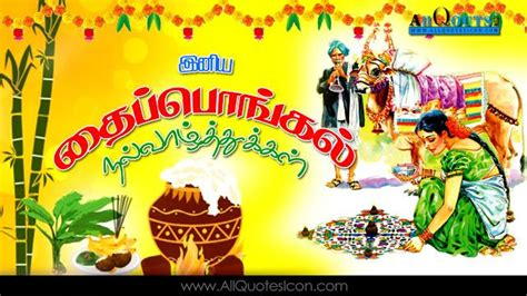thai pongal wishes  tamil hd wallpapers inspiration