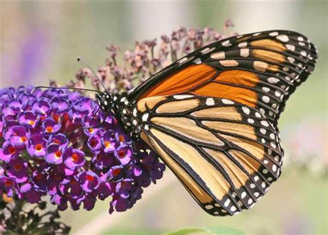 what colors attract butterflies butterflies orchid flowers