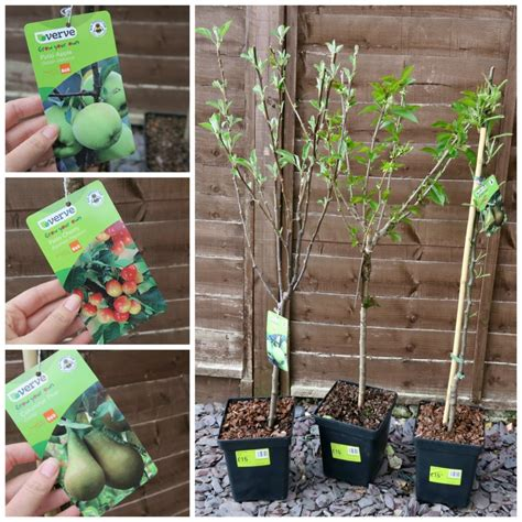 fruit trees names garden improvements with the ideas